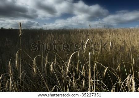 Field before a rain - stock photo