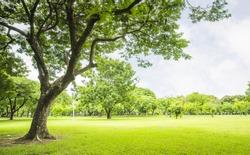 field, big tree, sun and blue sky