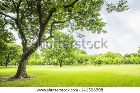 field, big tree, sun and blue sky