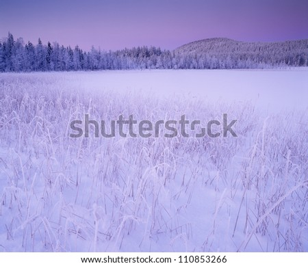 Field covered with snow