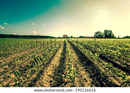 Field crops leading to a farm house