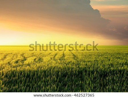 Field during sunset. Agricultural landscape #462527365