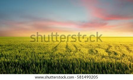 Field during sunset. Agricultural landscape #581490205