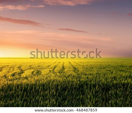 Field during sunset. Agricultural landscape in the summer time #468487859