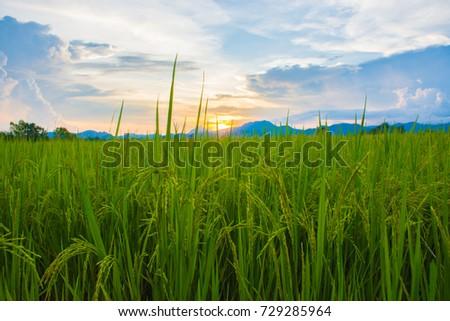 field evening #729285964