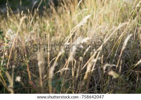 field field field