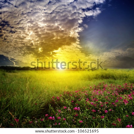 Field flowers in a meadow at sunset