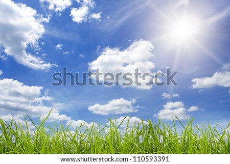 field green grass isolation on the sky backgrounds