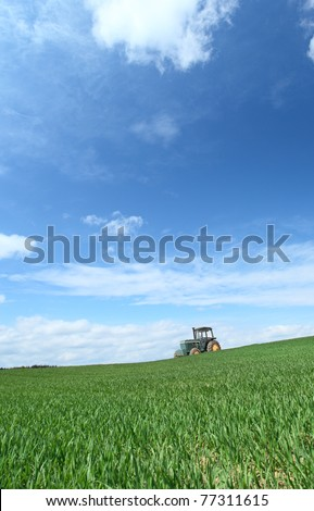 Field in a sunny day.