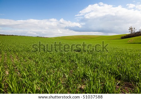 Field in Brandenburg, Germany