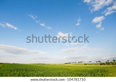 Field in Europe, photographed in warm light of afternoon. Beautiful landscape photograph of lush ecological farmlands in Poland.