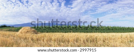 field in front of the Retezat Mountains, Southern Carpathians, Romania