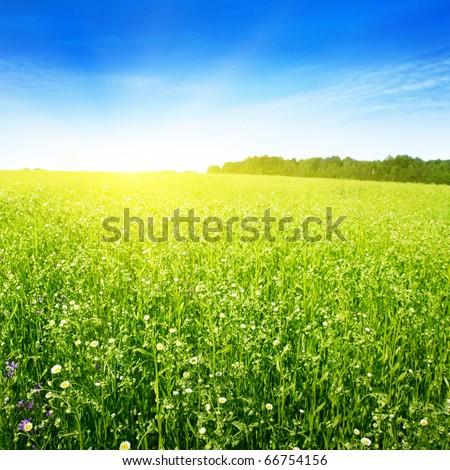 Field in summer and sun in blue sky. #66754156