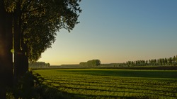 Field in the Flemish countryside in colorful evening light after sunset, with trees with long shadows