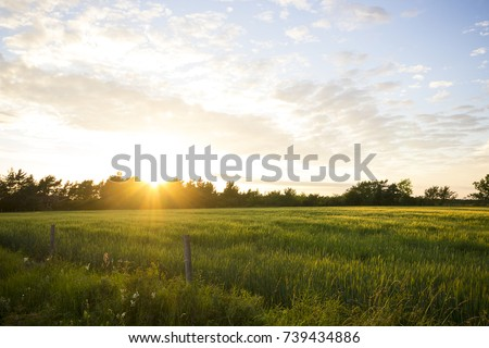 Field landscape in sunset #739434886