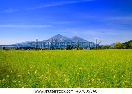 Field mustard and Mt.Bandai