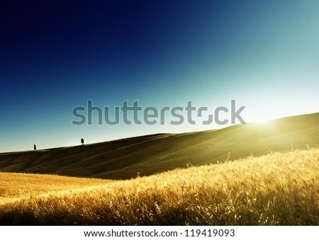 field of barley in Tuscany, Italy - stock photo