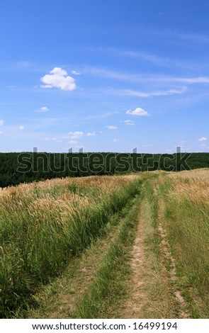 Field of barley - road.