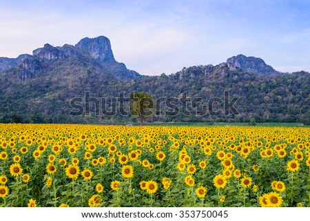 field of blooming sunflowers #353750045