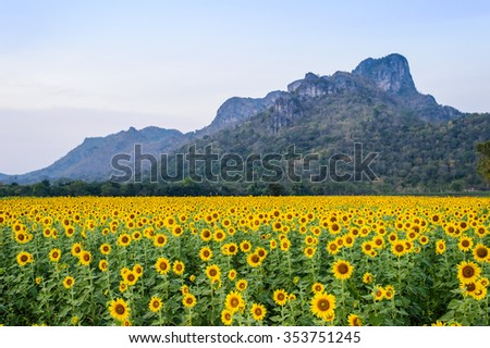 field of blooming sunflowers #353751245