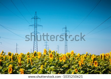 Field of blooming sunflowers on a background blue sky. #1035250621