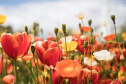 Field of bright colorful flowers on a bright sunny spring day