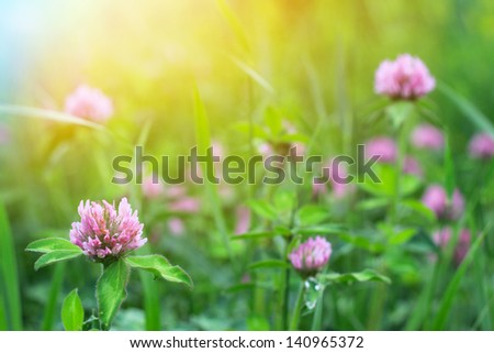 Field of clover flowers #140965372