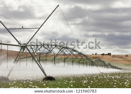Field of commercially grown Poppies for pharmaceutical production
