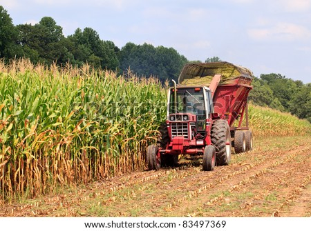 Field of corn being harvested in the late summer