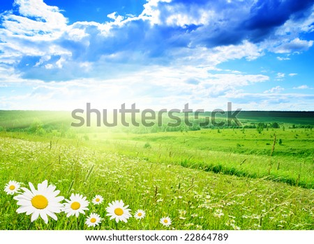 field of daisies and perfect sky - stock photo