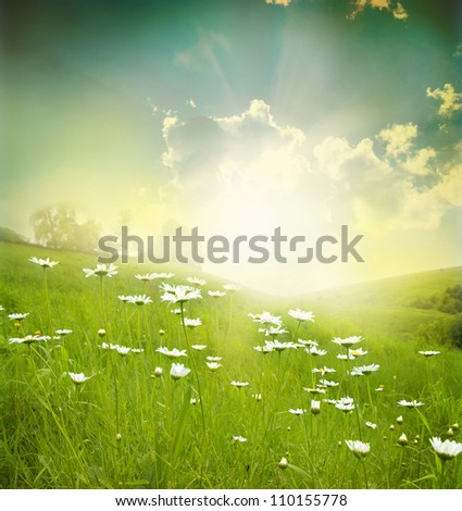 Field of daisies,  sky and sun.