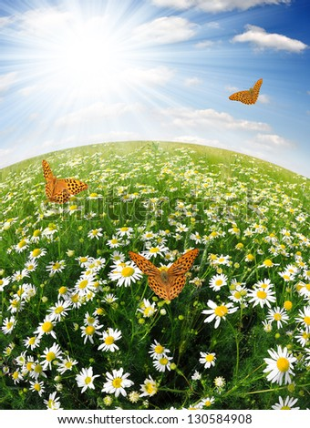 field of daisies with butterflies