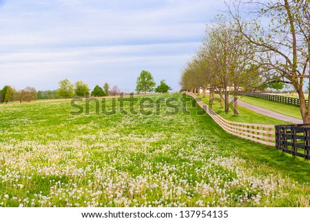 Field of dandelions at countryside.