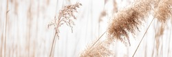Field of dry brown grass close-up on light natural background. Banner size.