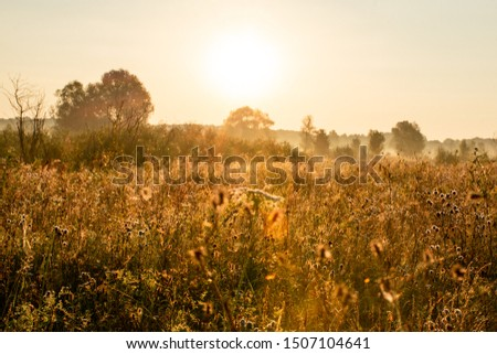 field of dry plants under sunset sky #1507104641