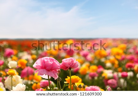 field of flowers - stock photo