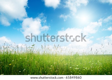 field of flowers and sunlight