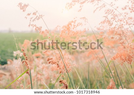 field of flowers, pink flowers, field background, flowers background