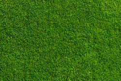 Field of fresh green grass texture as a background, top close up view, horizontal