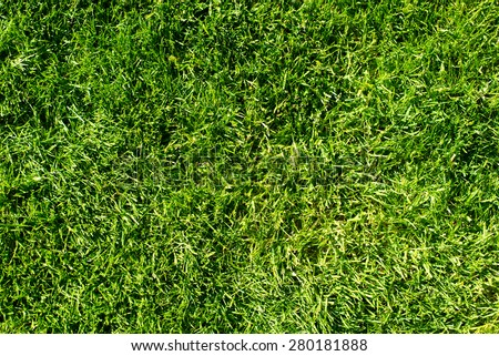 field of fresh green grass texture as a background, top view, horizontal