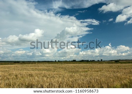 Field of grain, horizon and white clouds in the sky #1160958673