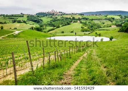 Field of grapes on a pond in Italy