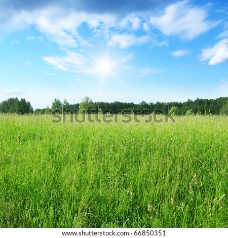 Field of grass and blue sky with sun.