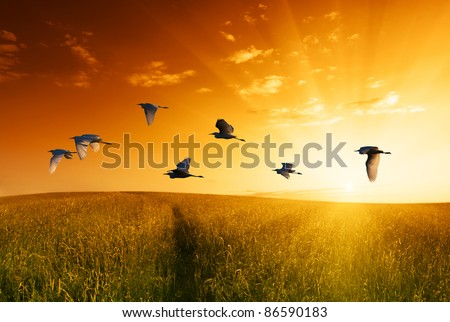 field of grass and flying birds - stock photo