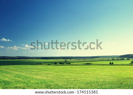 field of grass and forest