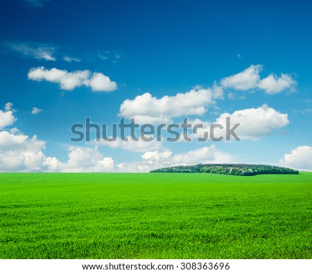 field of grass and perfect sky #308363696