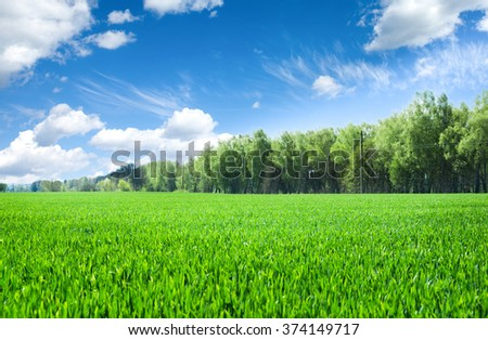 field of grass and perfect sky #374149717