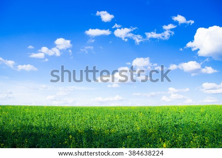 field of grass and perfect sky #384638224