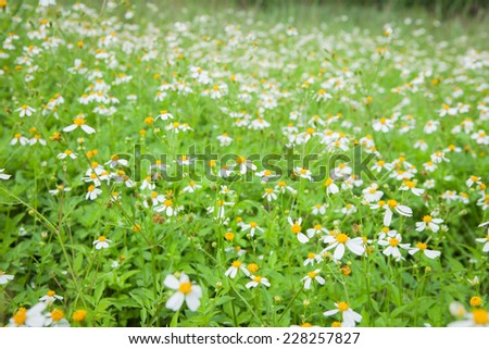 field of grass and small white flowers. #228257827