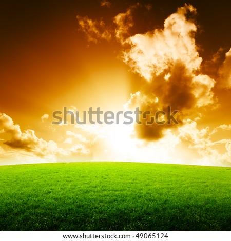 field of grass and sun